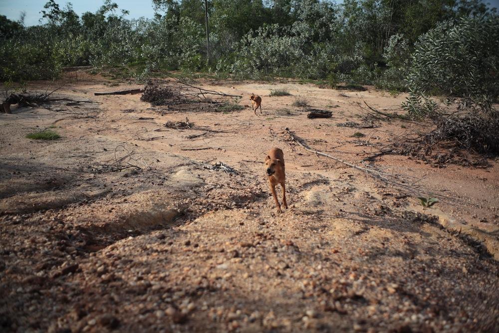 Degraded Land