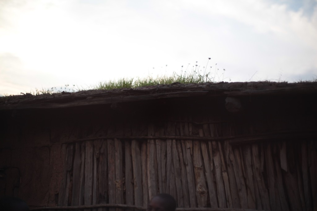 Grass growing on Samburu house