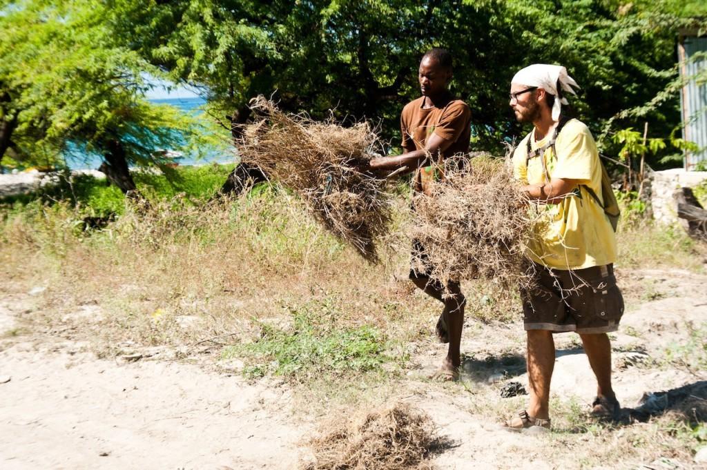 Mulching (2)