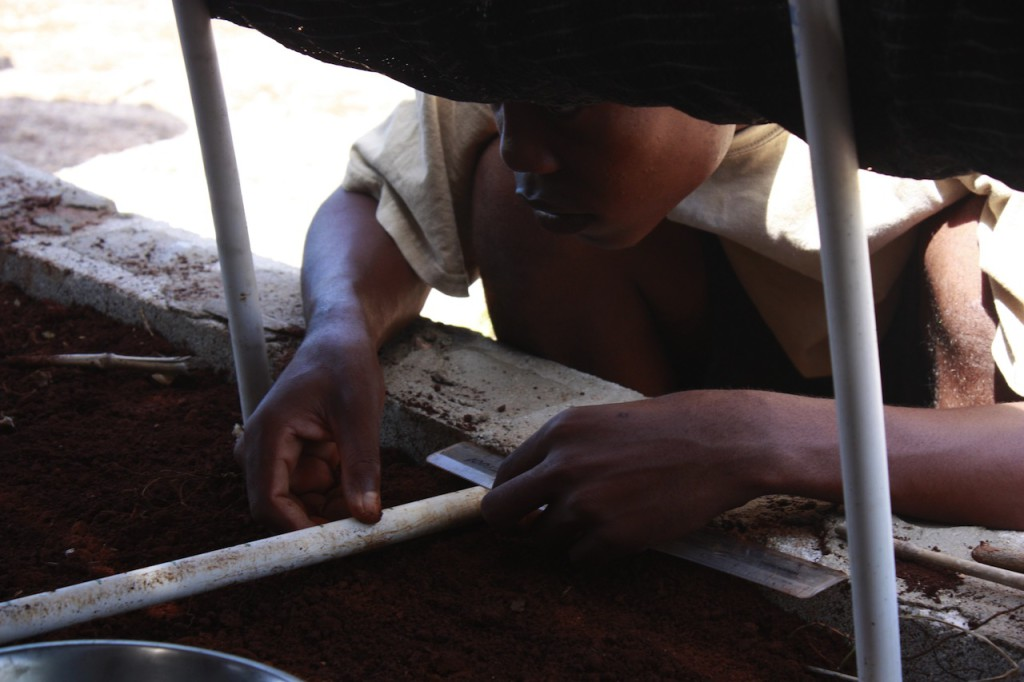 Planting Maya Nut seeds in nursery (2)
