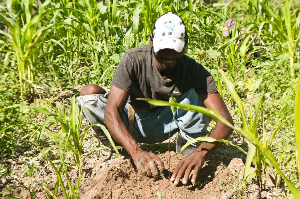 Planting a tree (3)