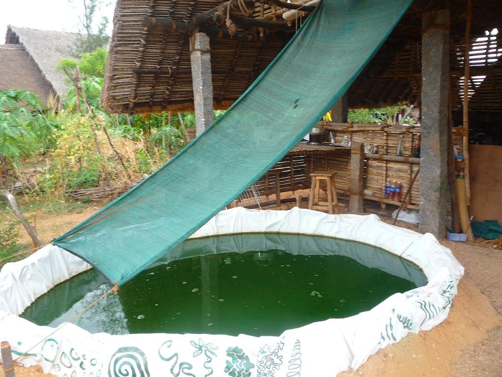 Spirulina pond (2)