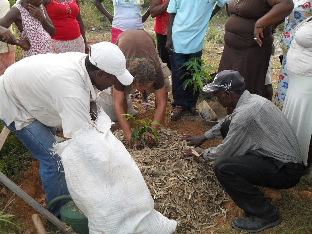 Tree planting training (2)
