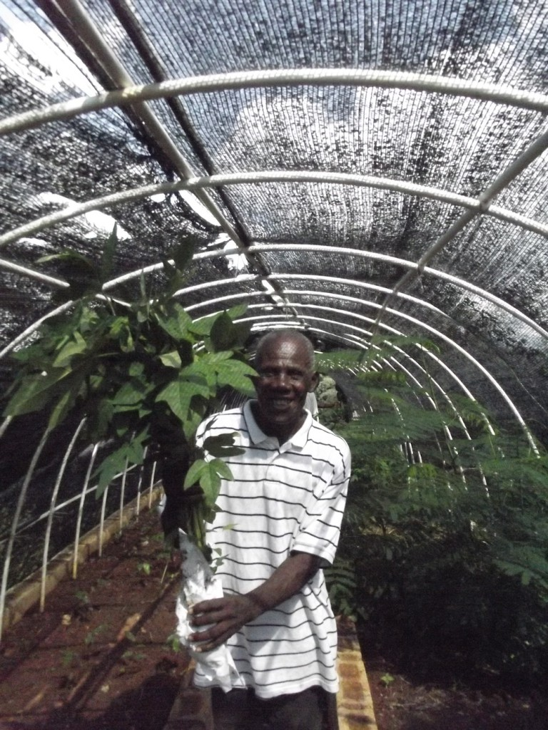 Papaya off to a new home Haiti