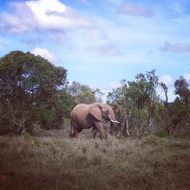 Elephant on the way